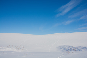雪の丘の野生動物の足跡と青空の写真素材 [FYI04731960]