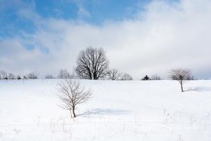 野生動物の足跡が続く雪の丘の写真素材 [FYI04731964]