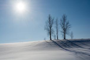 雪の丘の上の冬木立と青空の写真素材 [FYI04731965]