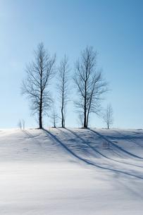 雪の丘の上の冬木立と青空の写真素材 [FYI04731966]