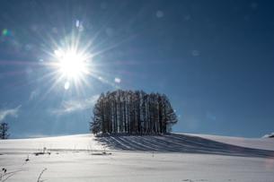 雪の丘の上のカラマツ林と冬の太陽の写真素材 [FYI04731969]