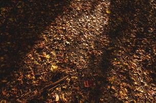 【秋】山道の地面に落ち葉 紅葉 の写真素材 [FYI04732003]