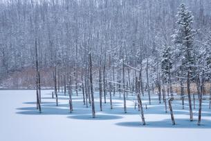 冬の青い池の写真素材 [FYI04732122]