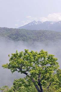 初夏の知床連山と霧(北海道・知床)の写真素材 [FYI04732158]