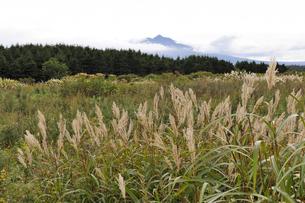 ススキと斜里岳(北海道・斜里町)の写真素材 [FYI04732179]