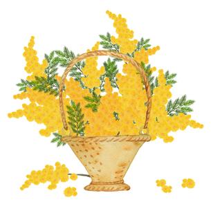 かごに入ったミモザの花のイラスト素材 [FYI04732263]