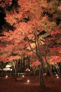 月の石もみじ公園の紅葉 ライトアップの写真素材 [FYI04732449]