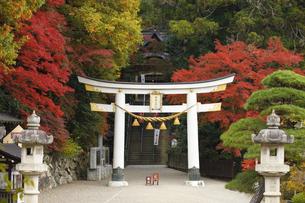 紅葉の宝登山神社の写真素材 [FYI04732451]