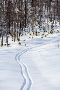 森林を抜けるスキーの跡の写真素材 [FYI04732524]