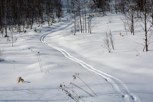 林の中を抜けるスキーの跡の写真素材 [FYI04732525]