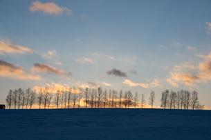 冬の夕暮れの空とシラカバ並木の写真素材 [FYI04732526]