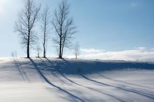 冬の丘の上に立つ冬木立の写真素材 [FYI04732528]