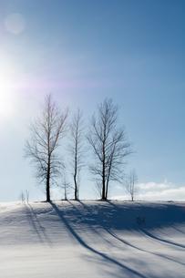 雪の丘の上に立つ冬木立の写真素材 [FYI04732529]