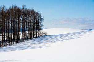 雪上に伸びるカラマツ林の影の写真素材 [FYI04732530]