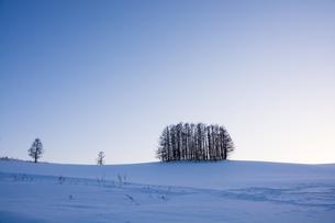 冬の夕暮れの丘のカラマツ林の写真素材 [FYI04732533]