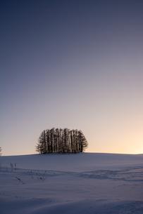 冬の夕暮れの丘のカラマツ林の写真素材 [FYI04732534]