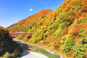 秋の黒部峡谷 トロッコ列車と紅葉の山並みの写真素材 [FYI04732574]