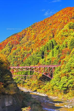 秋の黒部峡谷 トロッコ列車と紅葉の山並みの写真素材 [FYI04732577]