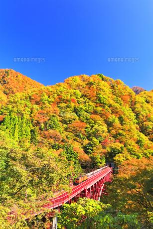 秋の黒部峡谷 トロッコ列車と紅葉の山並みに快晴の空の写真素材 [FYI04732578]