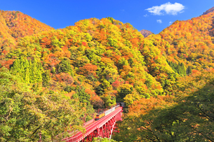 秋の黒部峡谷 トロッコ列車と紅葉の山並みの写真素材 [FYI04732579]