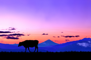 朝焼けの空に富士山のシルエットを背景に、高原の牧場を歩く牛のシルエットの写真素材 [FYI04732676]