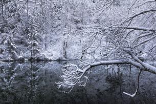 しおり雪 日本 新潟県 竜が窪の写真素材 [FYI04732825]