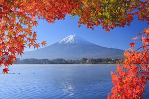 河口湖の紅葉と富士山の写真素材 [FYI04732965]