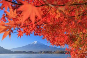 河口湖の紅葉と富士山の写真素材 [FYI04732966]