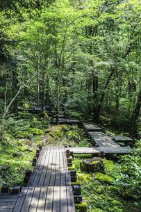 森の中のボードウォークの写真素材 [FYI04733149]