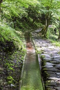 森の中の水路と石畳散策道の写真素材 [FYI04733150]