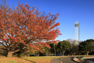 千葉ポートパークの紅葉と千葉ポートタワーの写真素材 [FYI04733300]