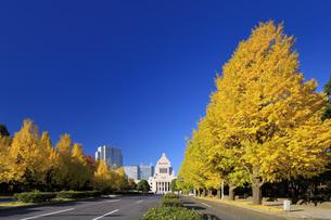 イチョウ並木と国会議事堂の写真素材 [FYI04733382]