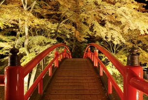 紅葉の河鹿橋 ライトアップの写真素材 [FYI04733396]