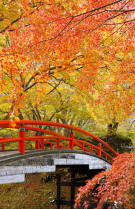紅葉の河鹿橋の写真素材 [FYI04733397]