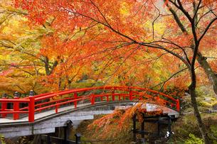 紅葉の河鹿橋の写真素材 [FYI04733398]