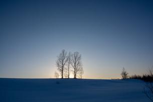 冬の夕暮れの丘に立つ冬木立の写真素材 [FYI04733582]