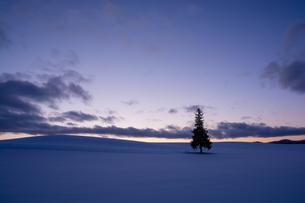 美しい夕暮れの空と雪原に立つマツの木 美瑛町の写真素材 [FYI04733586]