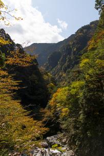 みたらい渓谷の紅葉の写真素材 [FYI04733616]