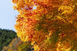 みたらい渓谷の紅葉の写真素材 [FYI04733641]