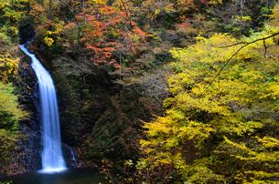 大仙の滝 紅葉の季節の写真素材 [FYI04733643]