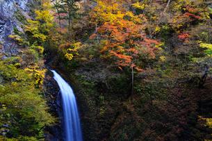 大仙の滝 紅葉の季節の写真素材 [FYI04733716]
