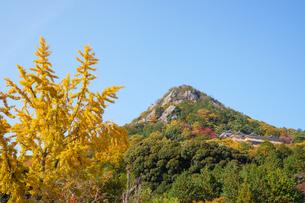 秋の太郎坊山の紅葉と黄色いイチョウの写真素材 [FYI04733717]