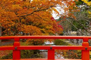 高野山の紅葉の写真素材 [FYI04733772]