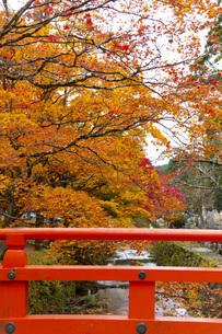 高野山の紅葉の写真素材 [FYI04733773]