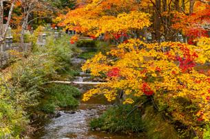 高野山の紅葉の写真素材 [FYI04733774]
