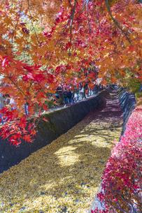 秋の彩り富士河口湖紅葉まつりの写真素材 [FYI04733780]