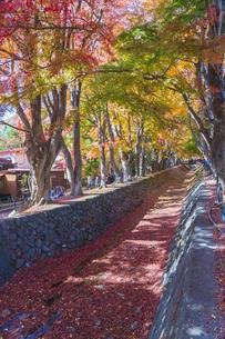 秋の彩り富士河口湖紅葉まつりの写真素材 [FYI04733784]