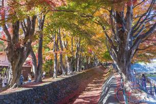 秋の彩り富士河口湖紅葉まつりの写真素材 [FYI04733787]