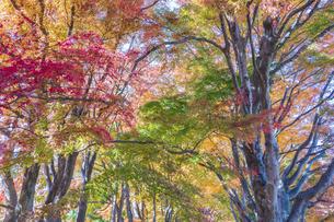 秋の彩り富士河口湖紅葉まつりの写真素材 [FYI04733788]