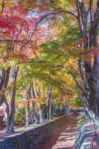 秋の彩り富士河口湖紅葉まつりの写真素材 [FYI04733789]